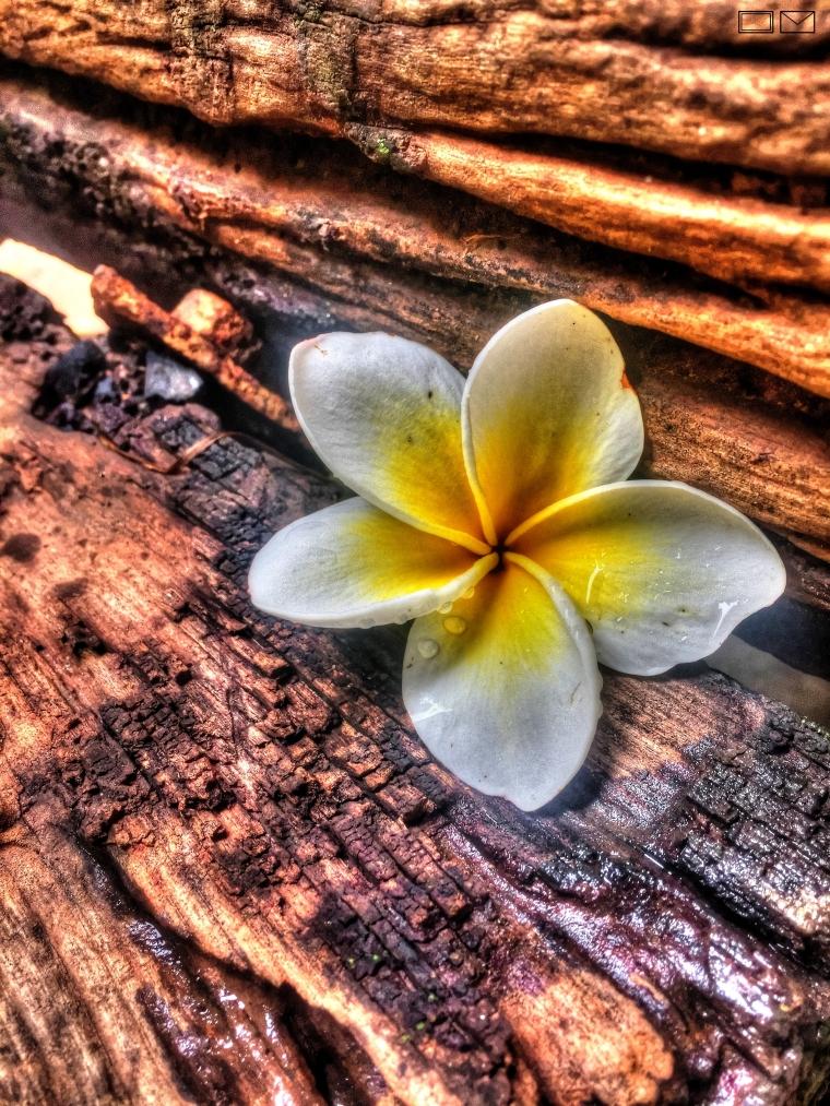 WM yellow flower